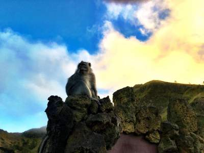 BLOG-BALI-IS-MORE-THAN-EATING-PRAYING-LOVING-monkey