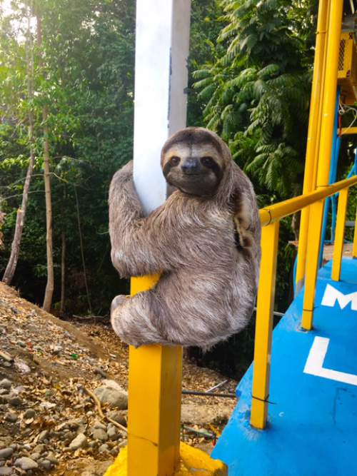blog-See-the-World-for-Only-$195-Down-sloth.jpg