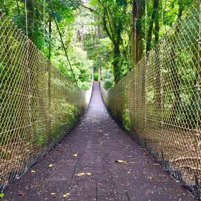 hanging-bridge-in-costa-rica