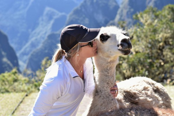 blog-The-Best-Experience-Themes-of-2017-llamas.jpg