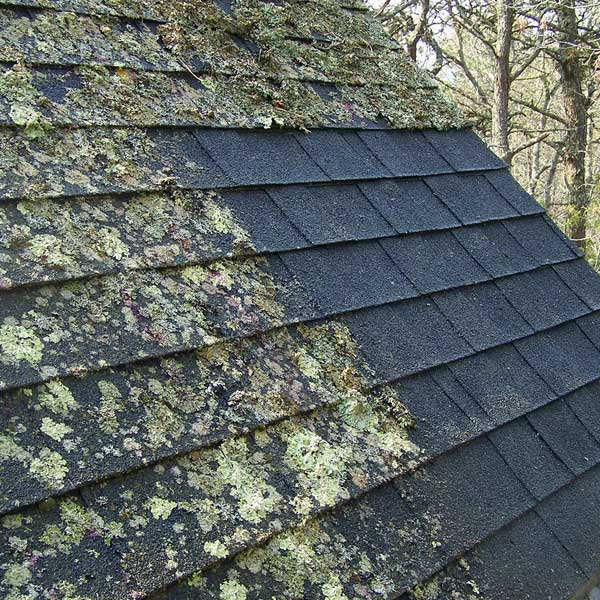 Roof cleaning helps combat allergies.