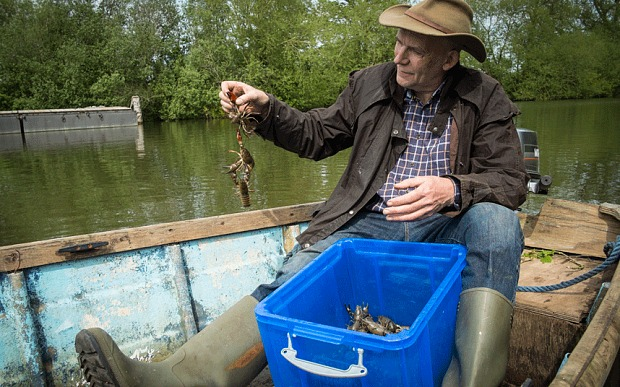 How do you get rid of invasive crayfish? Eat them, of course