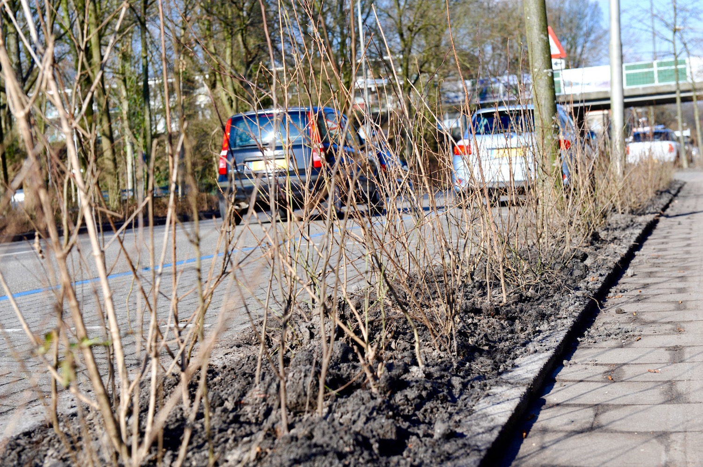 Rijksstraatweg Duivendrecht krijgt nieuwe groene haag