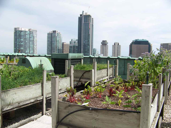 5 Reasons why urban farming just works on rooftops
