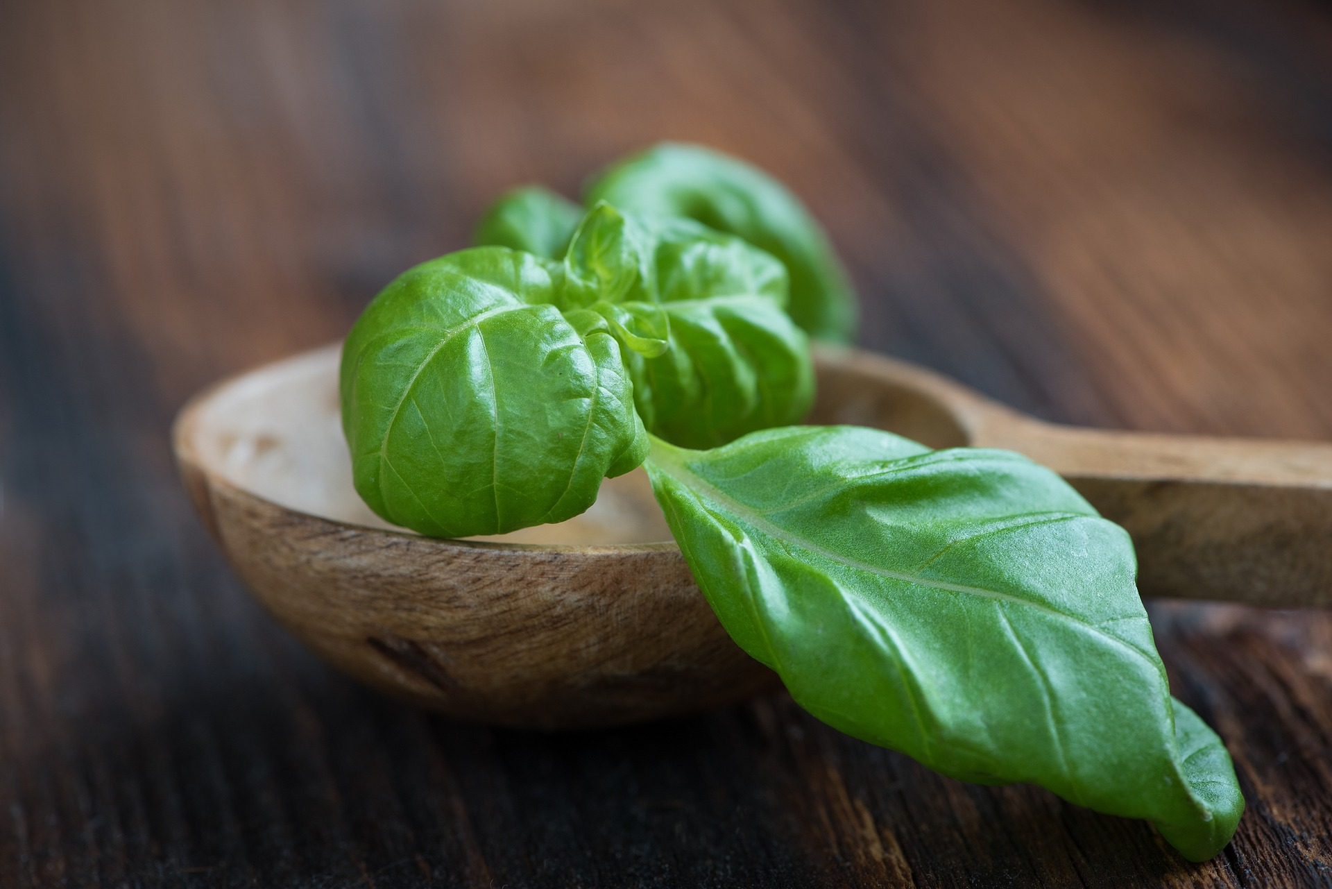 Urban Farming Case Study: How to grow tasty organic basil (for beginners)