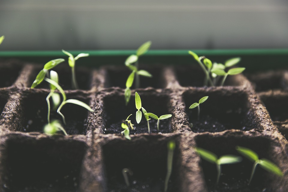 Why Urban Farming could play a key role national security