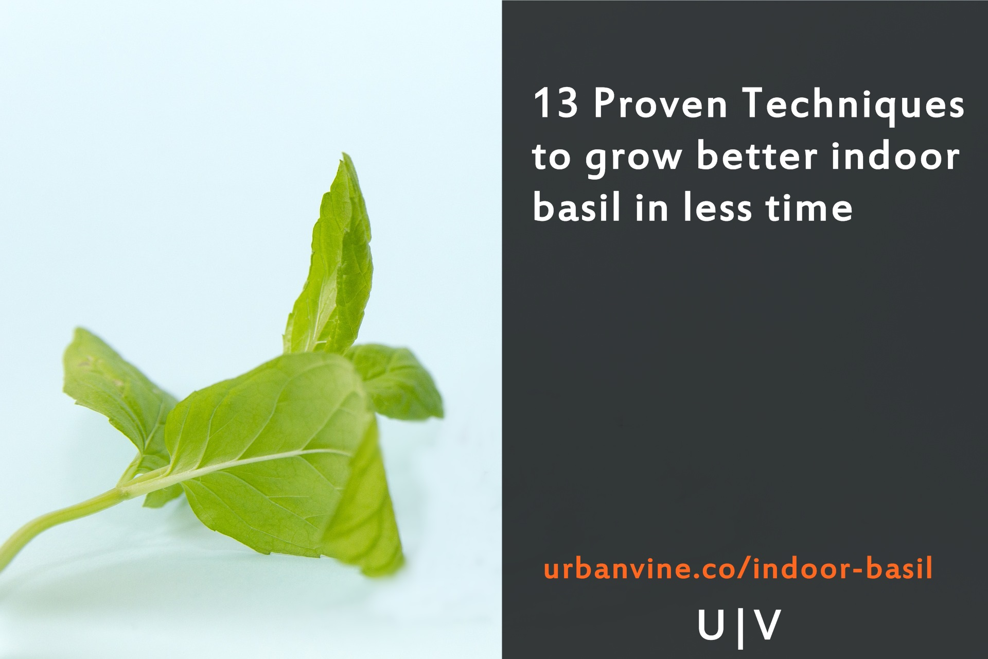 13 Proven Techniques to grow better indoor basil in less time