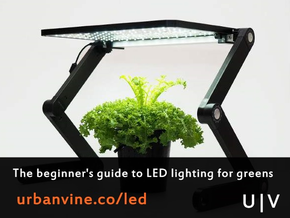 Explaining LED grow lights for urban farming