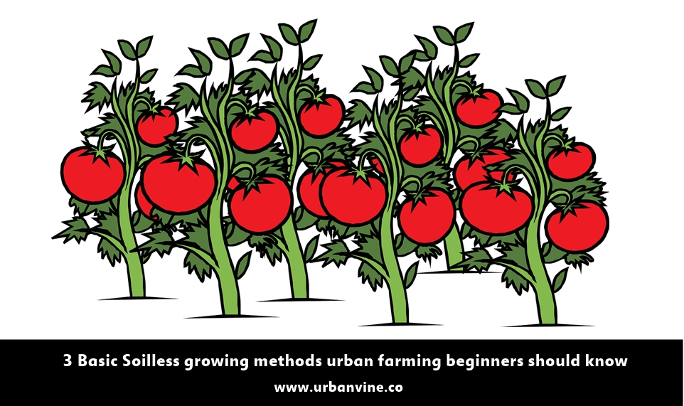 3 Basic Soil-less growing methods for urban farming beginners