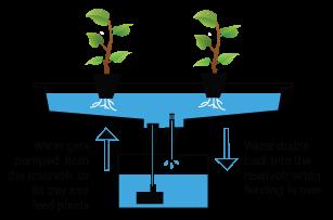 diagram: how hydroponics works