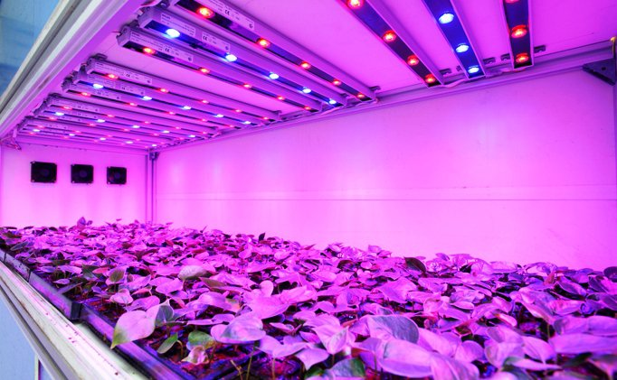 why you absolutely need grow lights