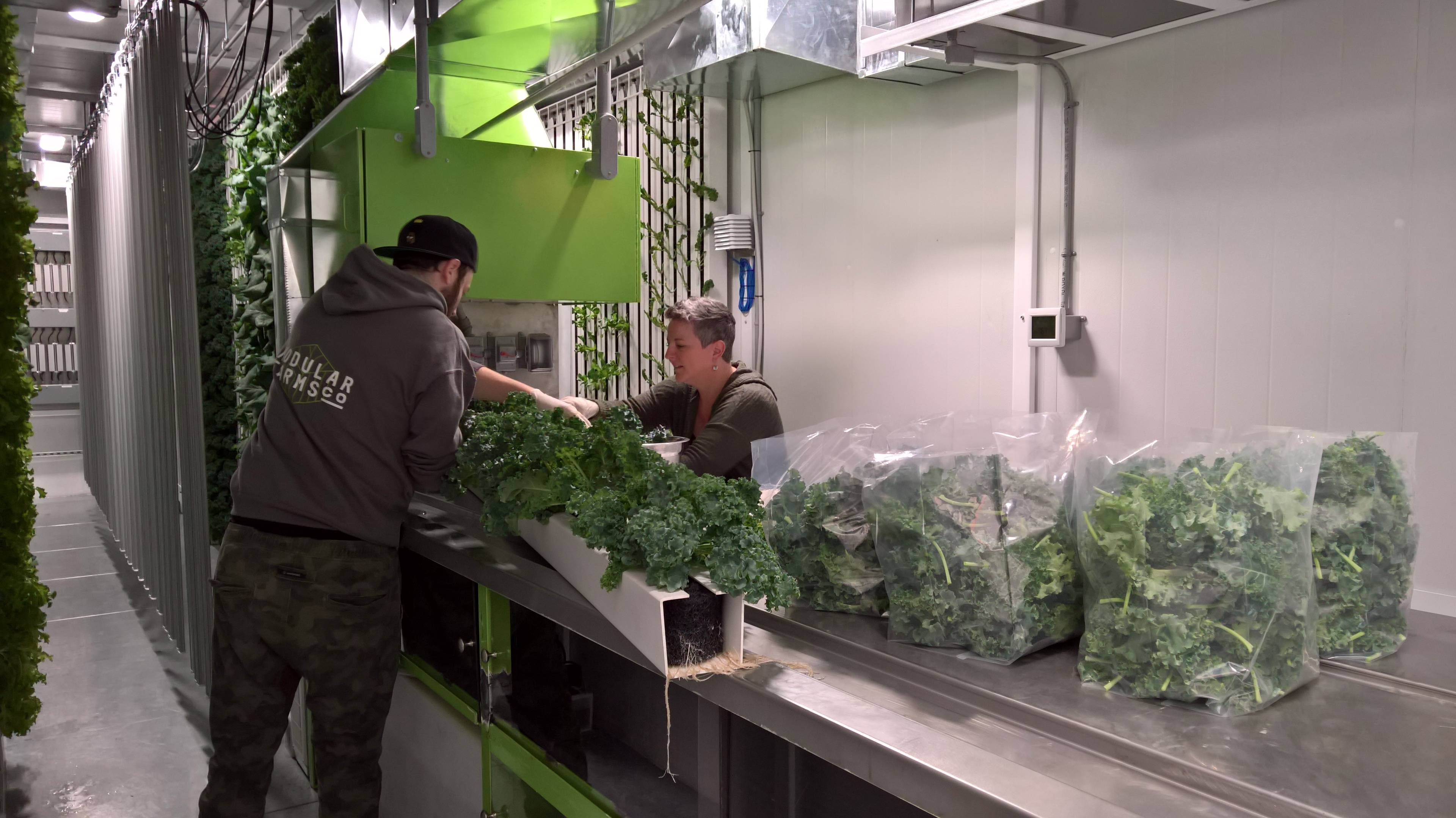 modular farms urban farming kale