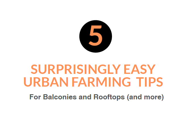 5 Surprisingly Easy Urban Farming Tips for Balconies and Rooftops (and more)