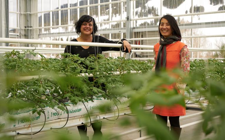 Urban Farming Insider: Penny McBride, Founder Vertical Harvest Jackson Hole
