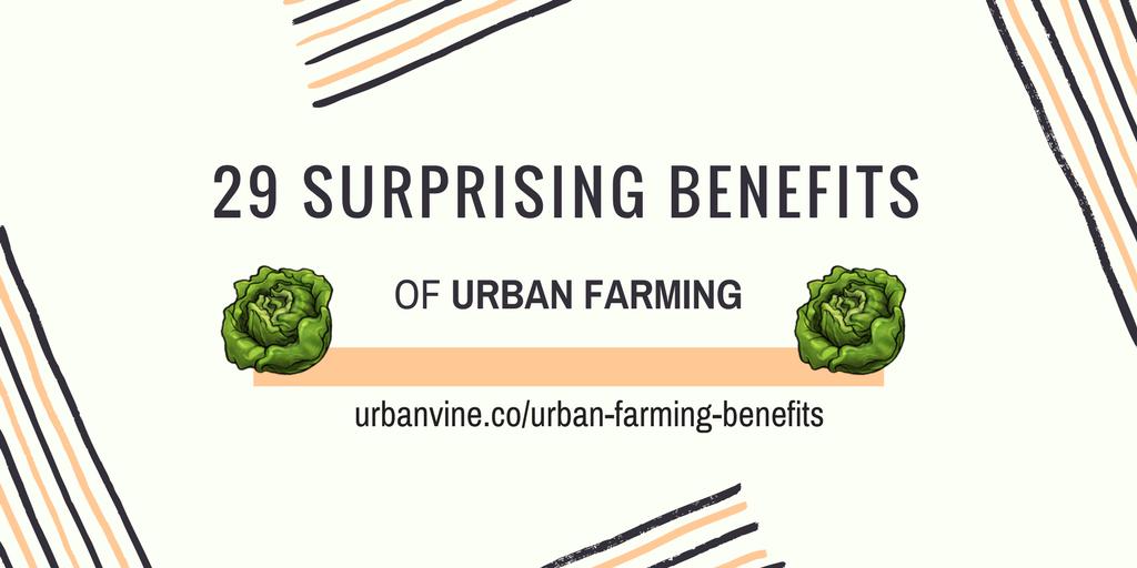 29 Surprising Benefits of Urban Farming