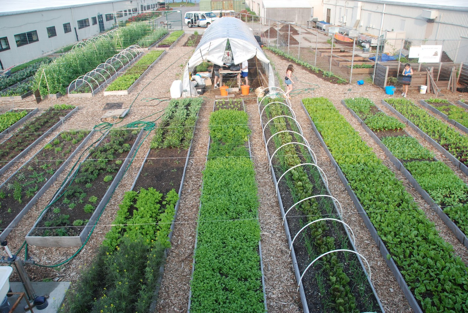 Urban Farm Example