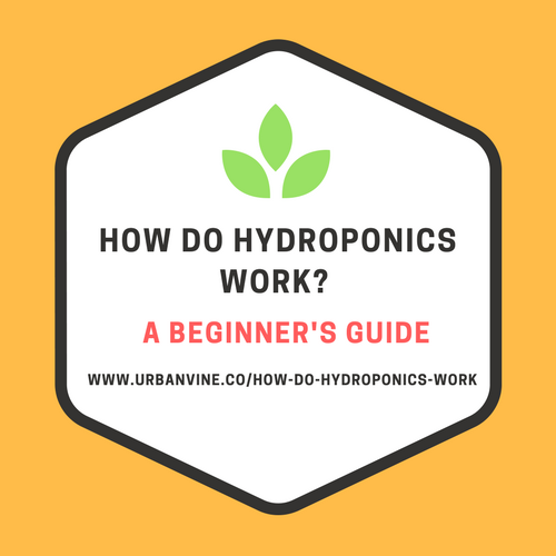 How do hydroponics work (A beginner's guide)
