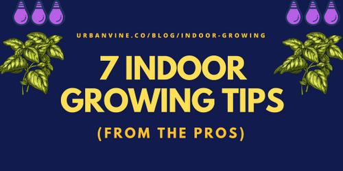 7 Top Indoor Growing Beginner Tips (An Easy Guide)