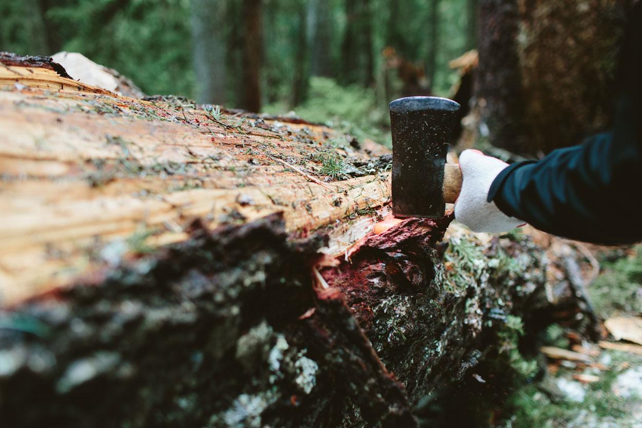 ax debarking tree