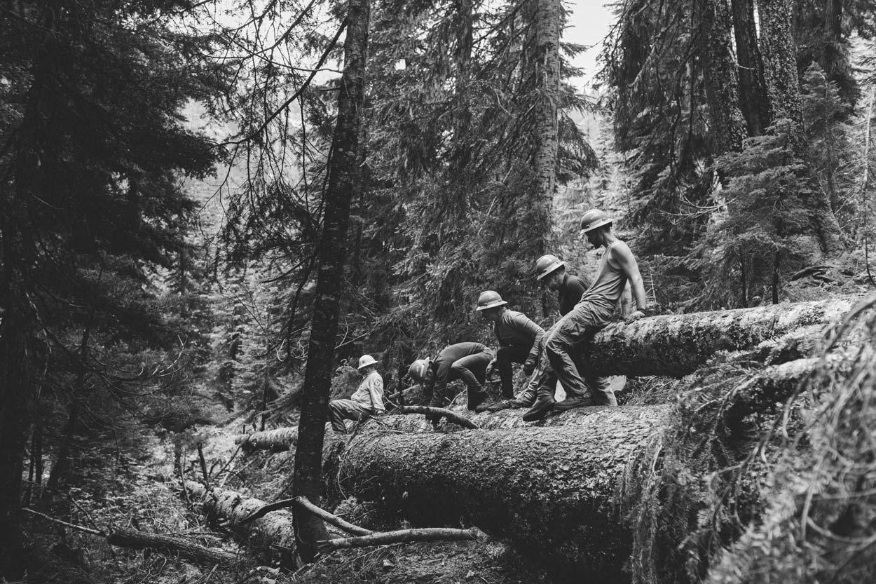 work crew pushing huge tree