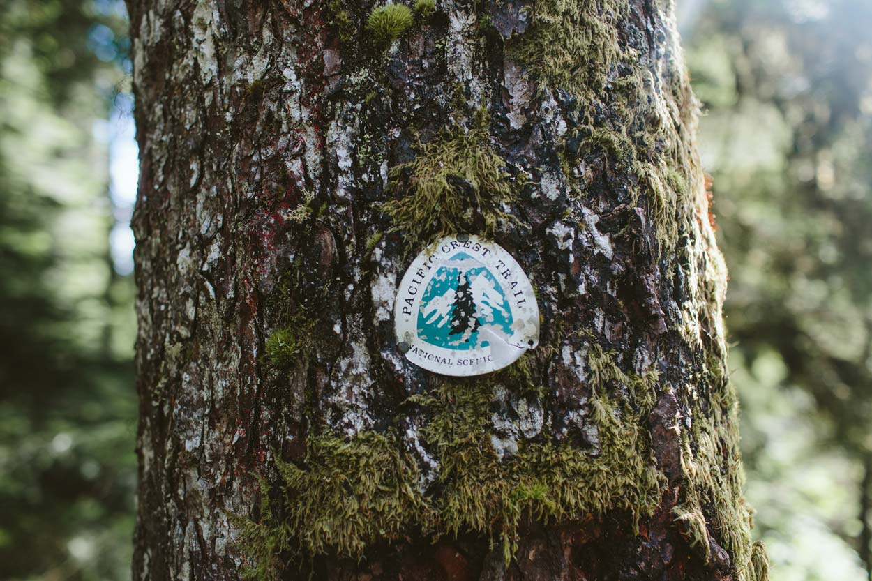 pacific crest trail sign logo in tree