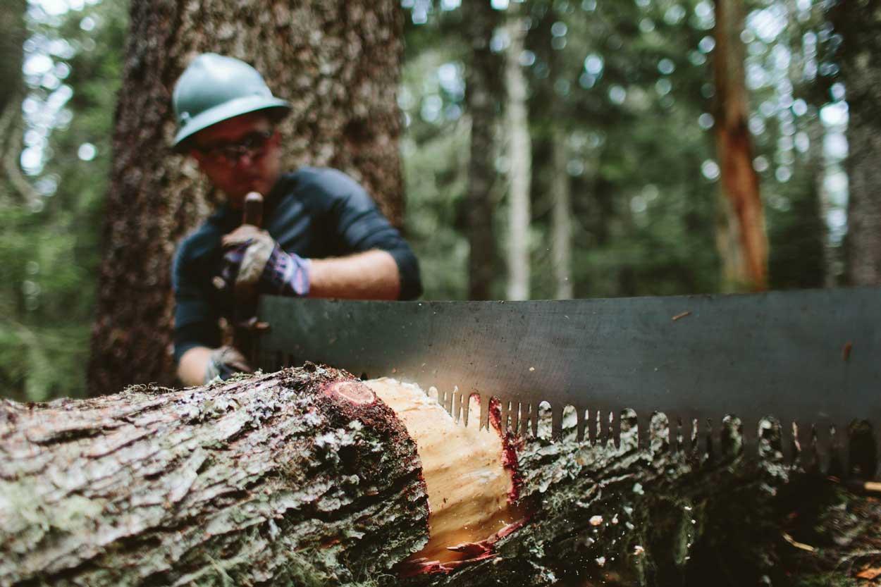 Wes Helander sawing away