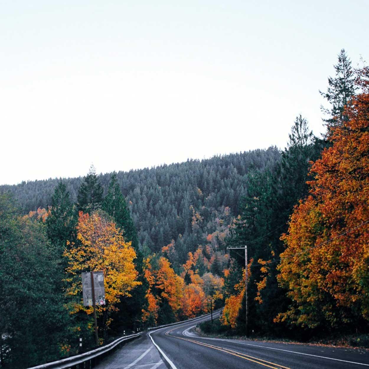 Driving to Mount McCausland hike fall trees