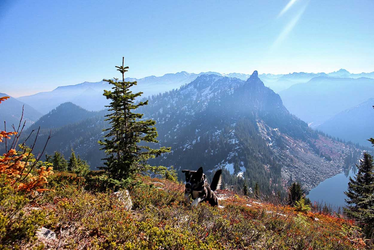 Crazy hiking dog bounding up mountain