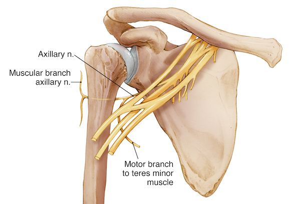 Axillary Nerve Injury
