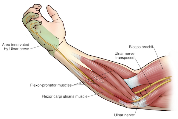 ulnar nerve - photo #39