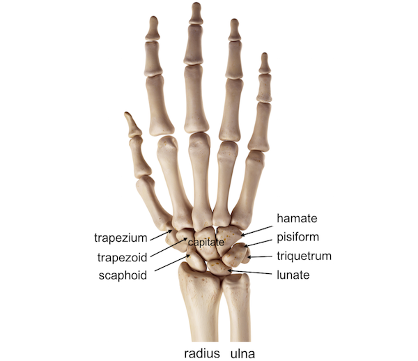 Carpal Bone Fractures