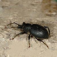 Rhode Island Weevil Control