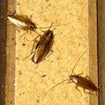 Rhode Island Cockroach Exterminating