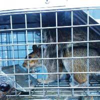 Humane Squirrels Control in Rhode Island