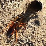 Ground Bee Control RI