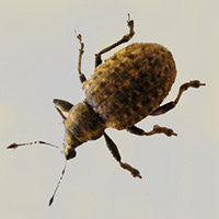 Pantry Pest Exterminator