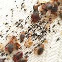 Bed Bug Control Tips