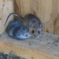 Mouse Control Blog
