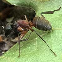 RI Ant Exterminator