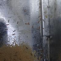 Rhode Island Ant Exterminator