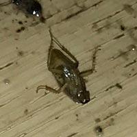 RI Cockroach Exterminator