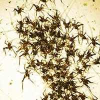 Rhode Island Cricket Control