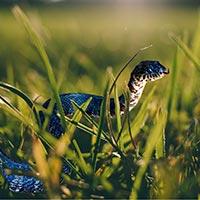 Rhode Island Snake Inspection
