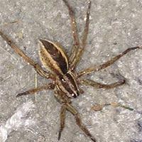 RI Spider Elimination