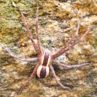 Spiders Bite RI