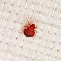 Rhode Island Bed Bug Elimination