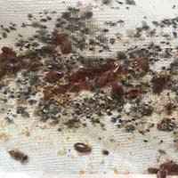 Rhode Island Bed Bug Exterminator