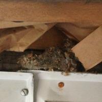 Mice Exterminator in Rhode island