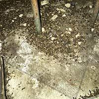 Rat inspection in RI