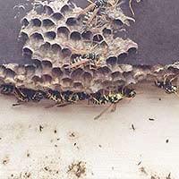 Wasp Inspection in Rhode island